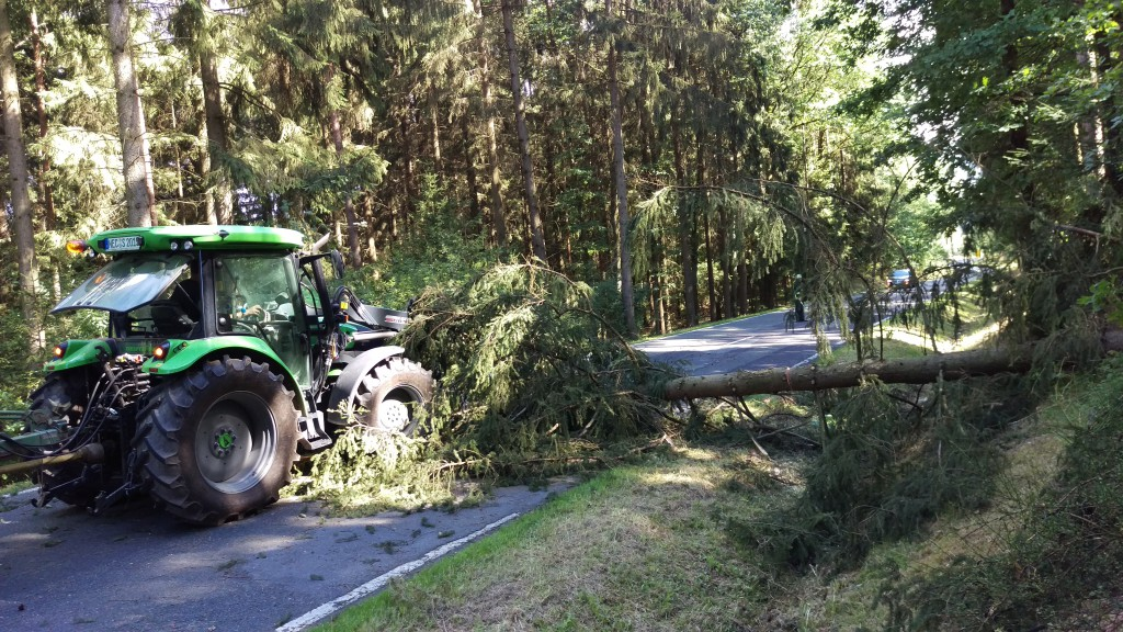Baum über Fahrbahn (2)